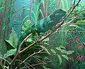 Brachylophus fasciatus (Fijian Iguana).jpg