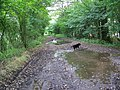 Bridleway, Middle Hills Wood - geograph.org.uk - 947969.jpg