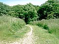 Bridleway entering wood - geograph.org.uk - 870329.jpg