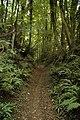 Bridleway in Folly Wood - geograph.org.uk - 1479928.jpg