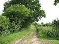 Bridleway to Ashby St Mary - geograph.org.uk - 1347169.jpg