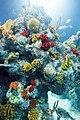 Bristol Aquarium 4.jpg