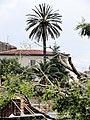 Brolo 22 05 2011 01.jpg