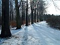 Broughton West Wood in winter - geograph.org.uk - 430600.jpg