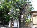 Bucuresti, Romania, Str. Batistei nr. 27-27A; Casa Boamba-Rahtivanu; B-II-m-B-21024 (3).JPG