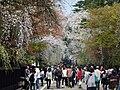 Bukeyashiki Street in Kakunodate 20180428c.jpg