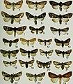 Butterflies and moths of Newfoundland and Labrador - the macrolepidoptera (1980) (20502237692).jpg