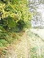 By Durfold Wood - geograph.org.uk - 1524658.jpg