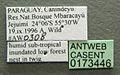 Camponotus sanctaefidei casent0173446 label 1.jpg