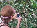 Capturing the Capuchin Monkey.jpg