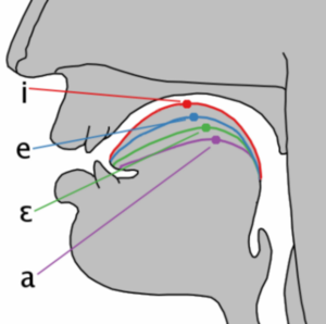 Cardinal vowel tongue position-front.png