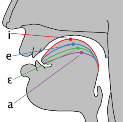 Cardinal vowel tongue position-front