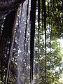 Cascade de Soulou 8.JPG