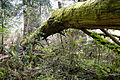 Cathedral Grove - Old Growth Forest - Vancouver Island BC - Canada - 01.jpg