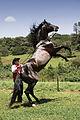 Cavalo de exibição.jpg