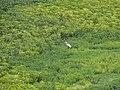 Centro, Petrolina - PE, Brazil - panoramio (21).jpg