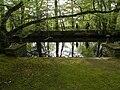 Cesson-Sévigné parc Chalotais.jpg