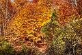 Chania trees.jpg