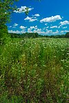 Cherry Lake Sedge Meadow.jpg