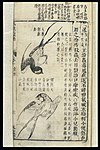 Chinese Materia medica, C17; Birds, red-rumped swallow Wellcome L0039347.jpg