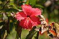 Christmas Island (5775080438).jpg