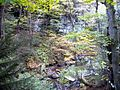 Cliffside-hills-Creek ForestWander.JPG