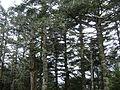 Clingmans Dome Appalachian Trail.jpg
