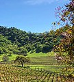 Clos la Chance Winery, Morgan Hill (III).jpg