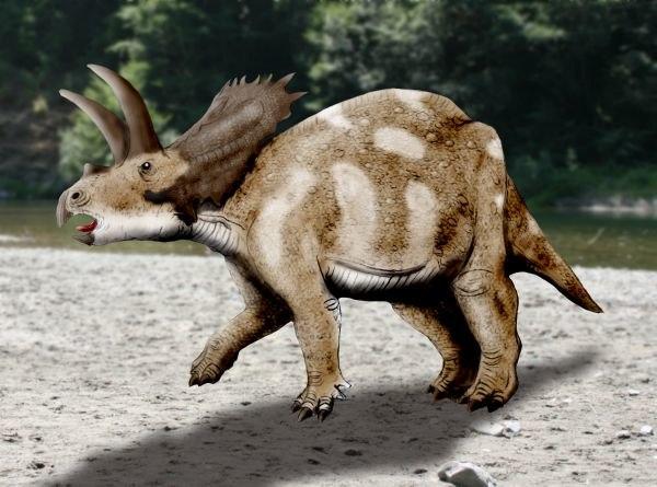 Coahuilaceratops NT