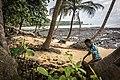 Coconut Picker.jpg
