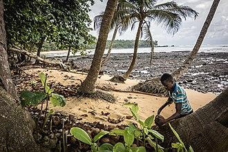 Economy of São Tomé and Príncipe - Image: Coconut Picker