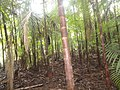 Colônia Terra Nova, Manaus - AM, Brazil - panoramio (1).jpg