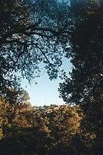 Collserola view2.jpg