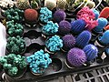 Colored Cacti 2 2018-07-03.jpg