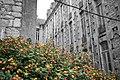 Colour amongst the ruins (51611134169).jpg