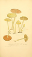 Coloured Figures of English Fungi or Mushrooms - t. 96.png