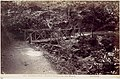 Colwyn Bay. Rustic Bridge in the Wood MET DP112676.jpg