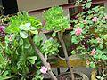 Common plant.jpg