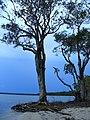 Conversation between trees - panoramio.jpg