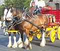 Coopers Cart.jpg