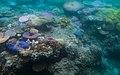 Coral Reef Bleaching.jpg