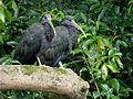 Costa Rica - Sarapiqui 14.jpg