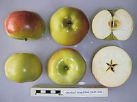 Cross section of Calville Duquesne, National Fruit Collection (acc. 1947-276).jpg