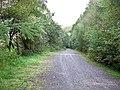 Crynant Forestry Walk - geograph.org.uk - 963619.jpg