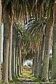 Cuba - Portugal (11654341955).jpg