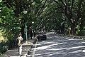 Cubbon Park DSC 5407.jpg