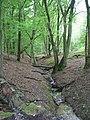Cuffley Brook, Northaw Great Wood - geograph.org.uk - 448376.jpg