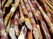 Harvested sugarcane from India ready for processing.