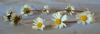 Garland - A daisy chain