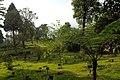 Darjeeling, India, Wild forest park near Darjeeling.jpg